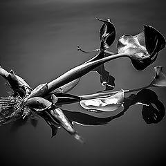 "photo ""Water hyacinths"""