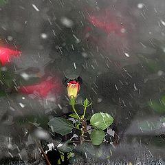 """фото """"Когда смотрели на зиму цветы"""""""