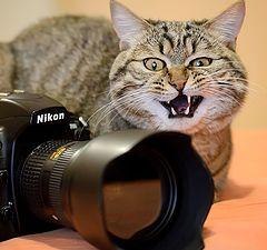 "фото ""Не трожьте  мой Nikon, а то укушу!"""