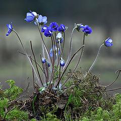 """фото """"Когда цветы были большими"""""""