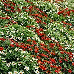 "photo ""Flowerbed"""