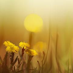 """фото """"Весна ..."""""""