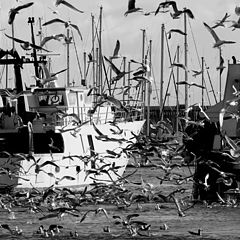 """photo """"noise in the harbour:seagulls"""""""