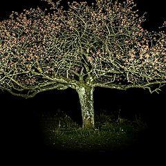 "photo ""night tree"""