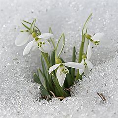 """фото """"Весна..."""""""