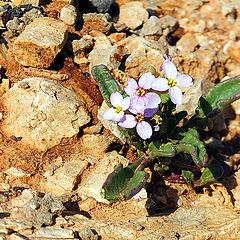 """фото """"В пустыне чахлой и скупой, на почве, зноем раскаленной..."""""""