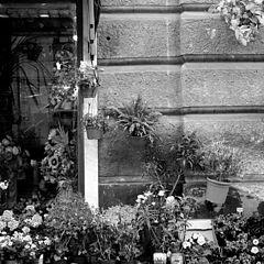 """photo """"flowers shop"""""""