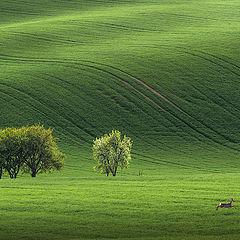 """фото """"Пейзаж с убегающей косулей"""""""