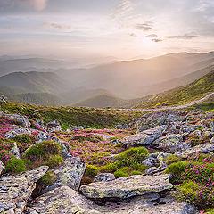 """фото """"Июньский закат на склонах Черногоры"""""""