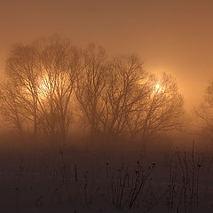 "photo ""the night ... the fog ... winter"""