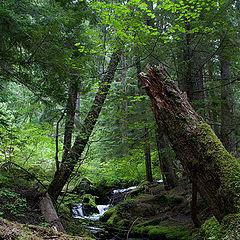 "photo ""Little creek in a rainforest"""
