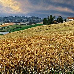 """фото """"Tuscany, Italy"""""""
