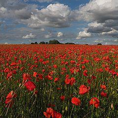 "photo ""Harvest Red"""