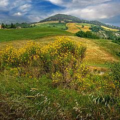 """фото """"Tuscany"""""""