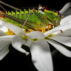 "фото ""Grasshop"""