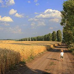 """фото """"Пшеничное поле"""""""