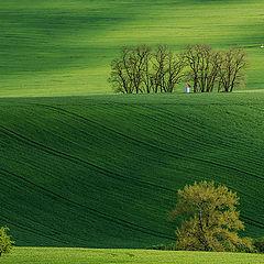 "фото ""Весеннее поле"""