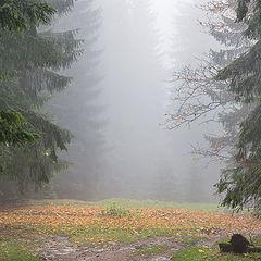 """фото """"Осенний лес"""""""