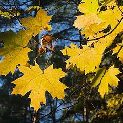 """фото """"Желтые листья"""""""