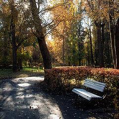 "photo ""last sunny days"""