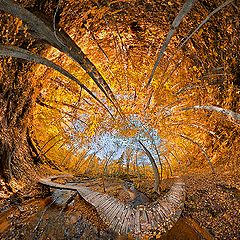"""фото """"Осень в Зазеркалье..."""""""