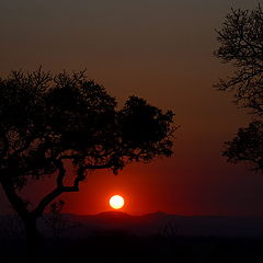 "photo ""Kruger National Park"""