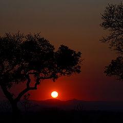 """фото """"Kruger National Park"""""""