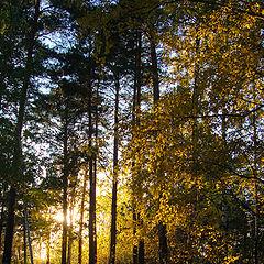 "photo ""evening rays"""