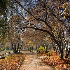 """фото """"Не спеша, и листьями шурша, гуляла в парке осень."""""""