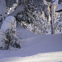 "фото ""Утро в зимнем лесу."""
