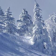 "фото """"Чародейкою Зимою околдован, лес стоит..."""""