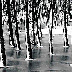 "фото ""Frosted forest"""