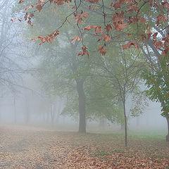"""фото """"Осенние контрасты"""""""