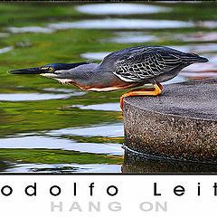 "фото ""bird"""