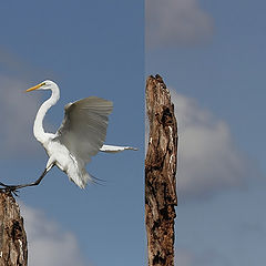 "photo ""Perfect landing"""
