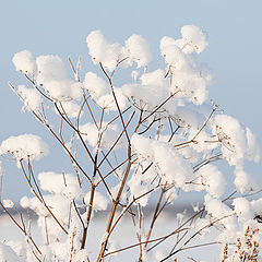 "фото ""Снежный хлопок"""
