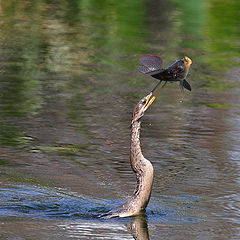 """photo """"Catch of the day"""""""