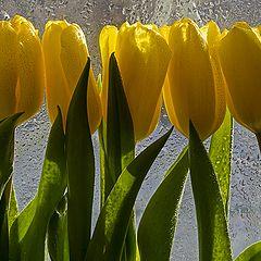 "фото ""К чему дарят желтые цветы ?"""