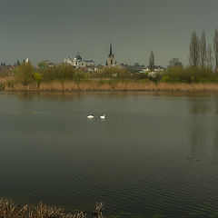 "фото ""Про прилетевших лебедей, весну и дождливое небо над старым городом..."""