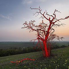 """photo """"Fiery Tree"""""""