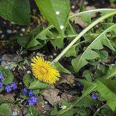 """фото """"Весна под ногами"""""""