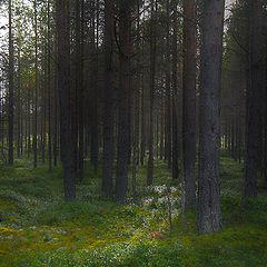 "фото ""Walk in the wood ..."""