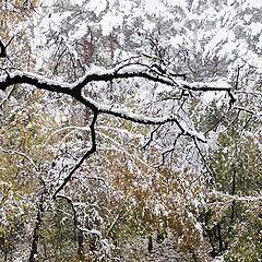 """фото """"клешни зимы"""""""