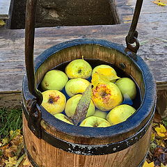 """photo """"Witch well and apples. Tuhala."""""""