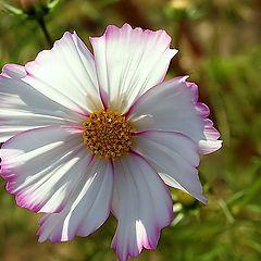 """фото """"A Litle Flower..."""""""