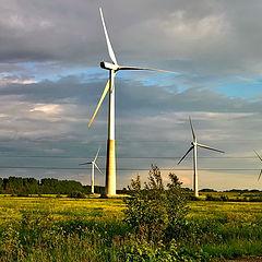 "photo ""Ida-Viru County. Estonia ... to rehouse the forest ...."""