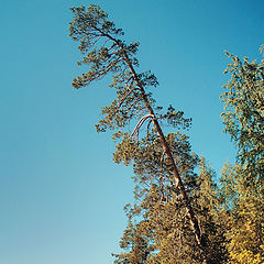 "photo ""somewhere in Karelia"""