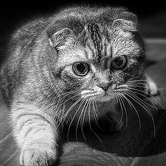 """фото """"Kitten"""""""