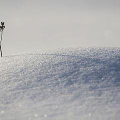 "фото ""Холодная планета ""Земля"""""