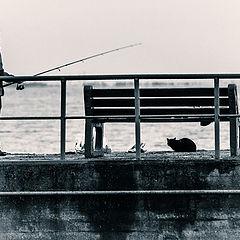 "фото ""cat and fisherman"""